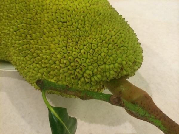 Jack Fruit Kauai photo by Linda Sherman
