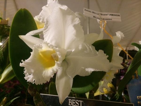Kauai White Orchid photo by Linda Sherman